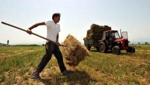An unidentified farmer collects a bale of hay near southeastern Macedonian village of Stojakovo, on Monday, June 14, 2010.   (AP Photo/Boris Grdanoski)