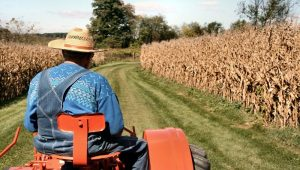 A veteran farmer rides his aging orange tractor into corn fields surrounding Kutztown PA, as he prepares a harvest for sileage. 2007-10-14.